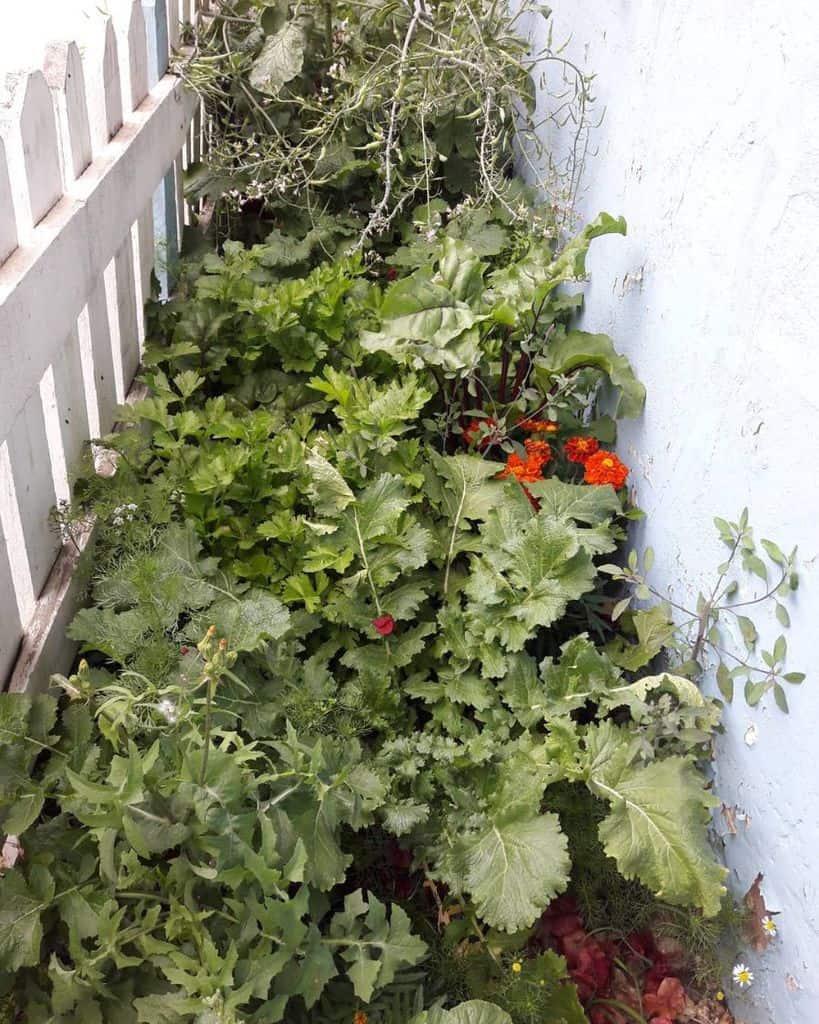 sideyard vegetable garden ideas training_allama