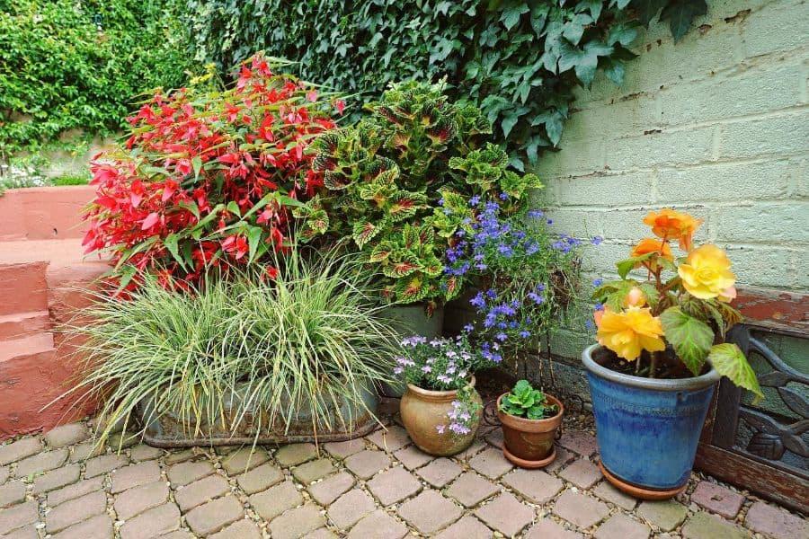 small backyard container garden ideas bureauofplantindustry