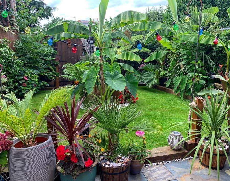small backyard container garden ideas tropical_plant_addict