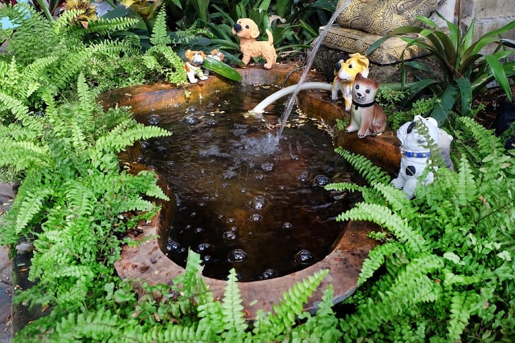 Small Backyard Container Pond