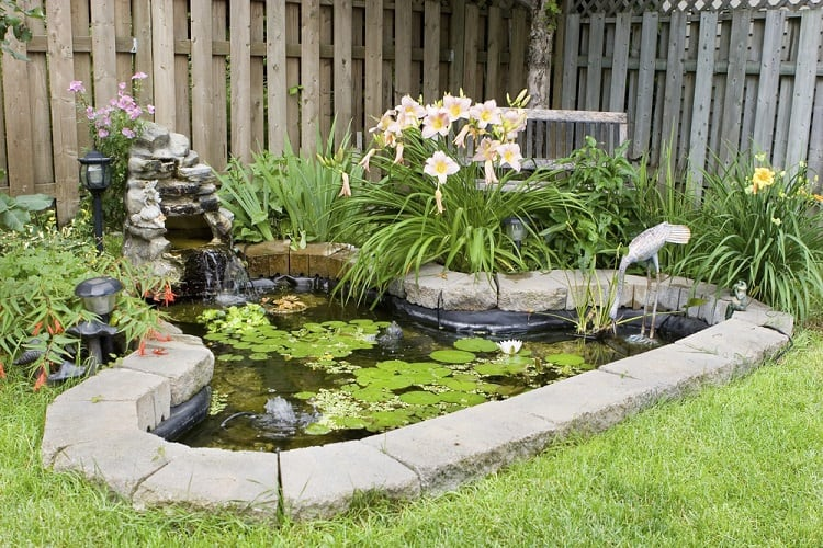 Small Corner Backyard Garden Pond