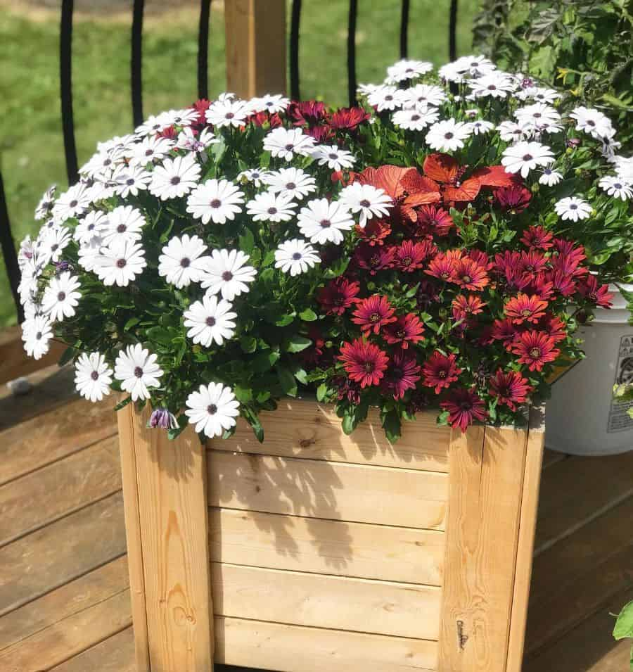 small flower bed ideas growthwithamber