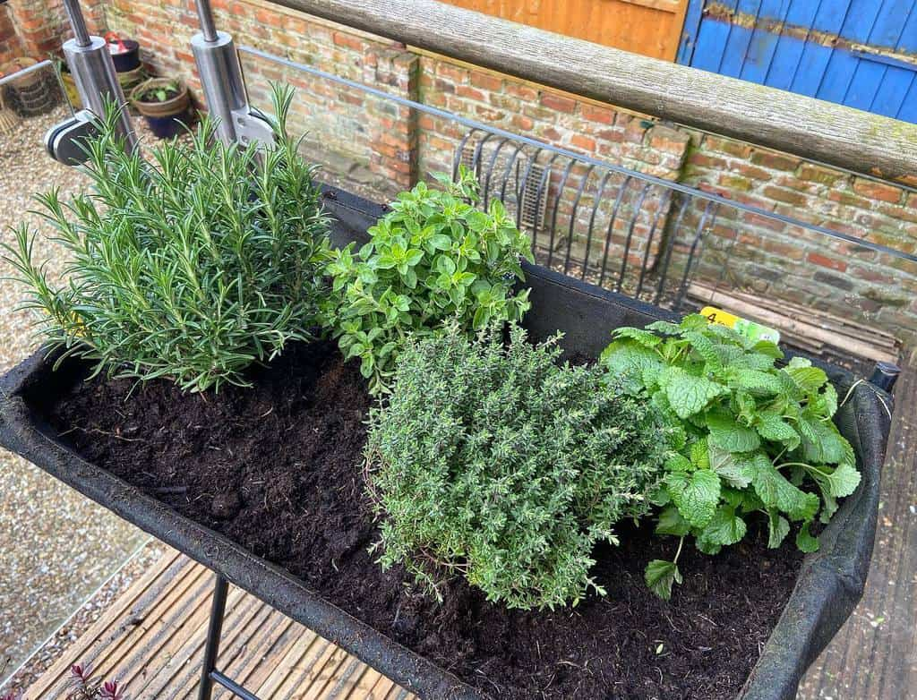 small garden herb garden ideas emily_thegardener