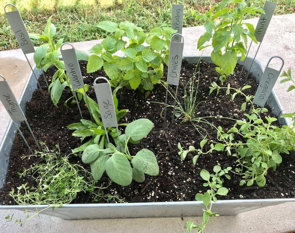 small garden herb garden ideas lettucegrowsomething