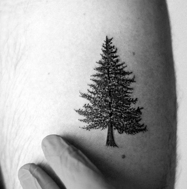 Small Mens Pine Tree Tattoo Design On Arm