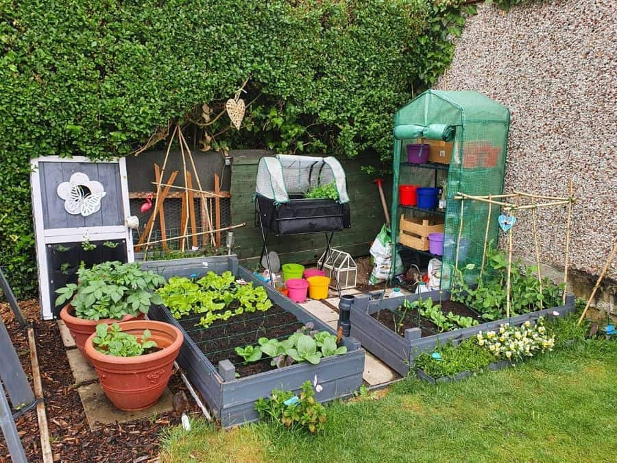 small veggie patch vegetable garden ideas dolly_patch