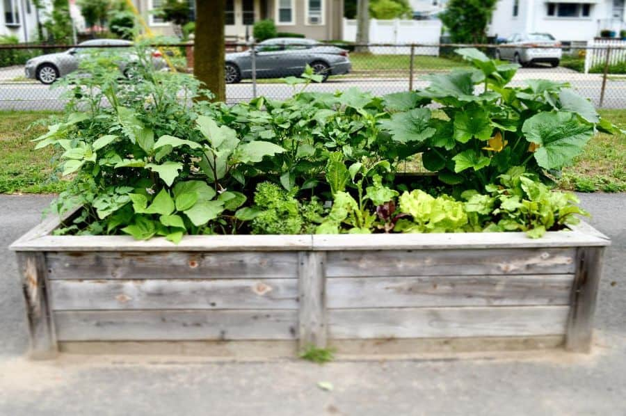 small veggie patch vegetable garden ideas fayefully_yours