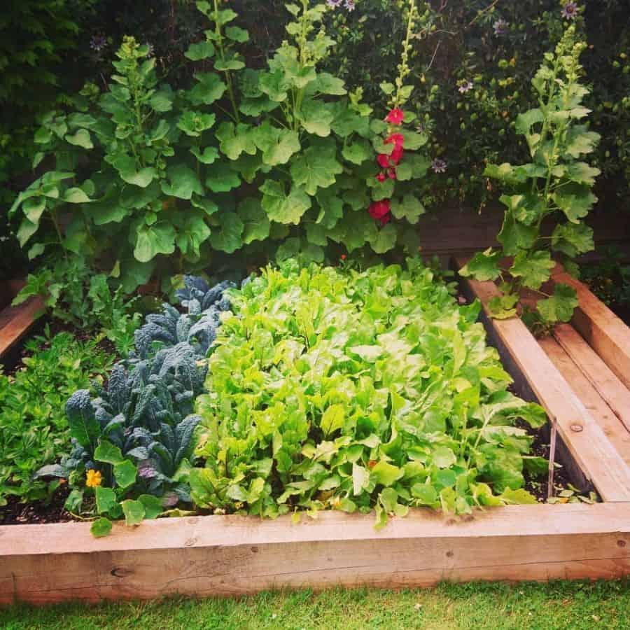 small veggie patch vegetable garden ideas gooney83