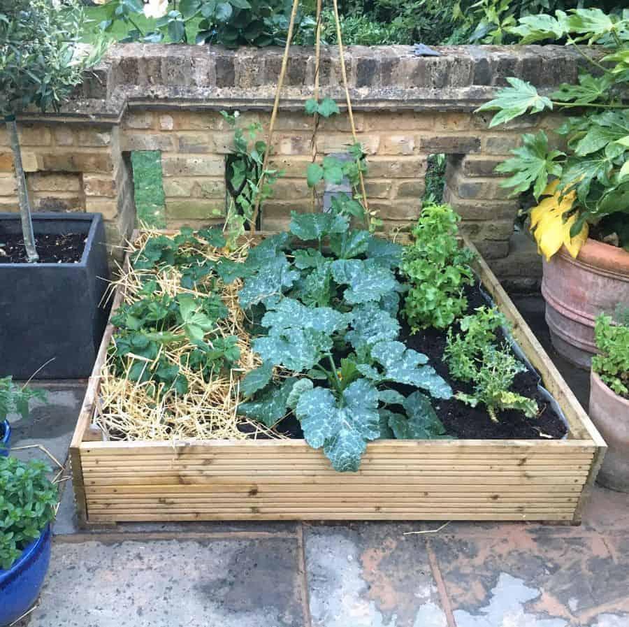 small veggie patch vegetable garden ideas northlondontownhouse