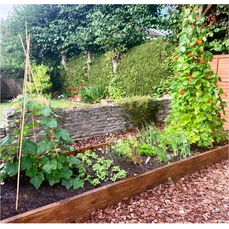 small veggie patch vegetable garden ideas thewellnessprogramme