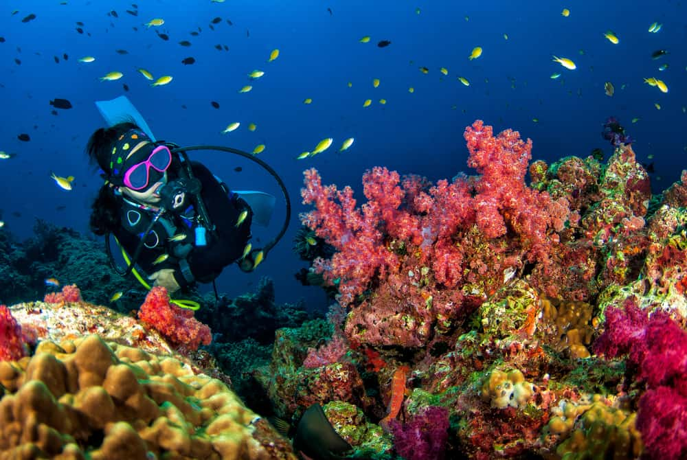 women scuba diving near to soft coral reef