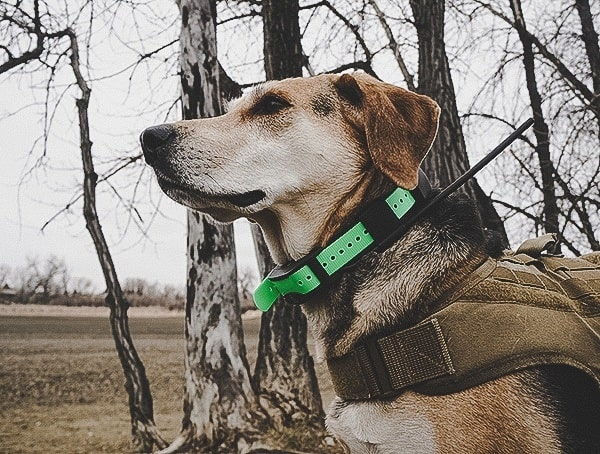Sportdog Brand Tek 1 5 Gps Tracking Plus E Collar Review