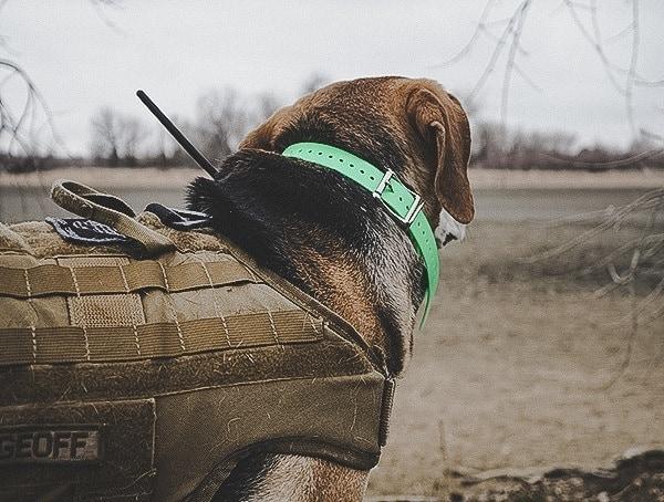 Sportdog Brand Tek 1 5 Gps Tracking Plus E Collar Training Review