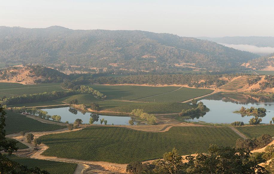 st-supery-vineyards