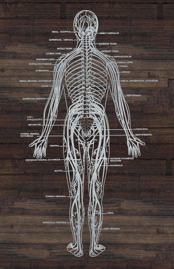 Tattoo Pain Scale Major Nerves In Body