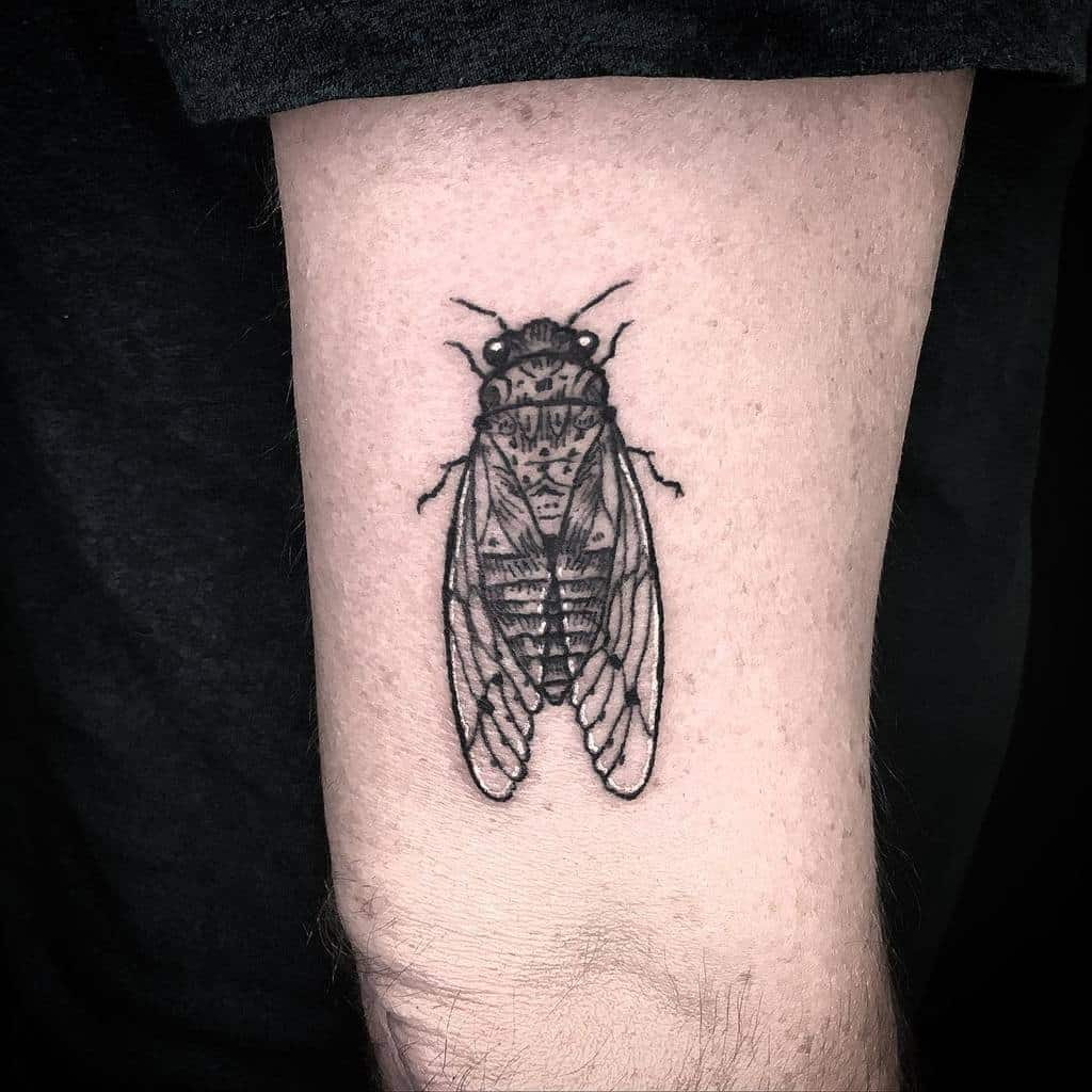thigh Cicada Tattoos aurelio_tattoo