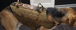 Top 15 Best Tactical Dog Harnesses – Modular Molle Canine Vests