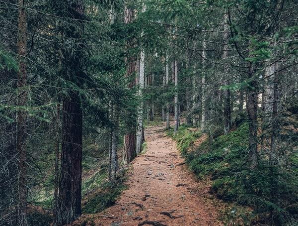 Trail Management Money Making Ideas