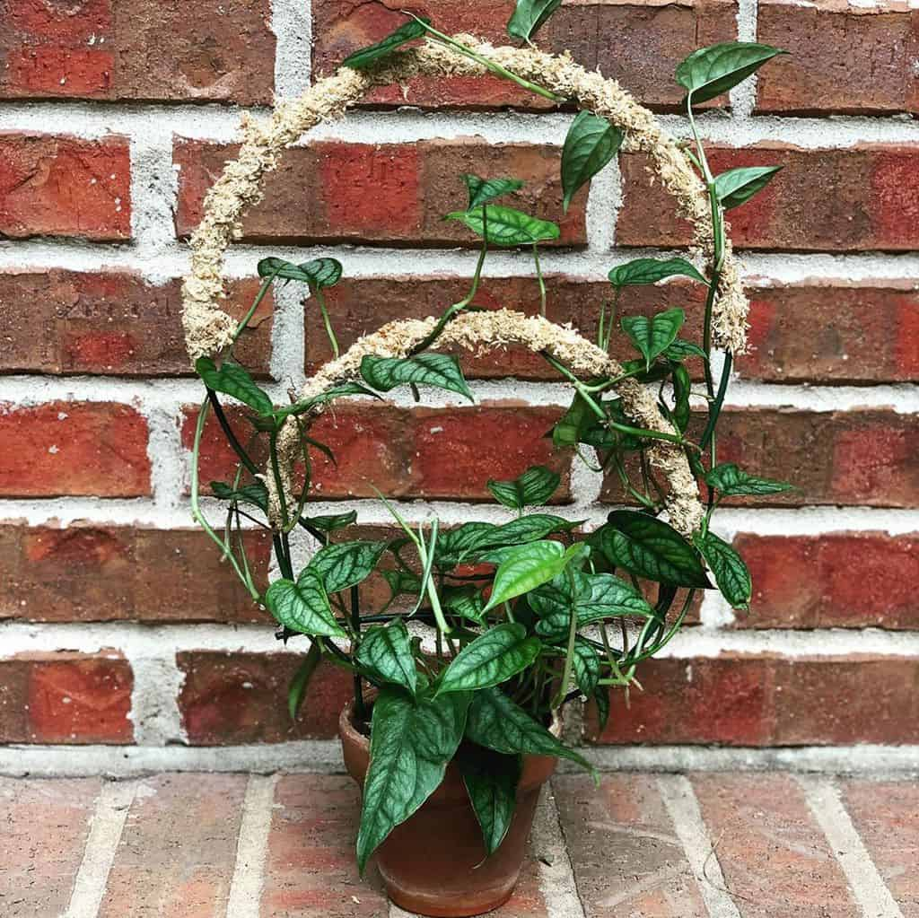 trellis for small pots and raised garden garden trellis ideas twisted.stem.plant.trellises