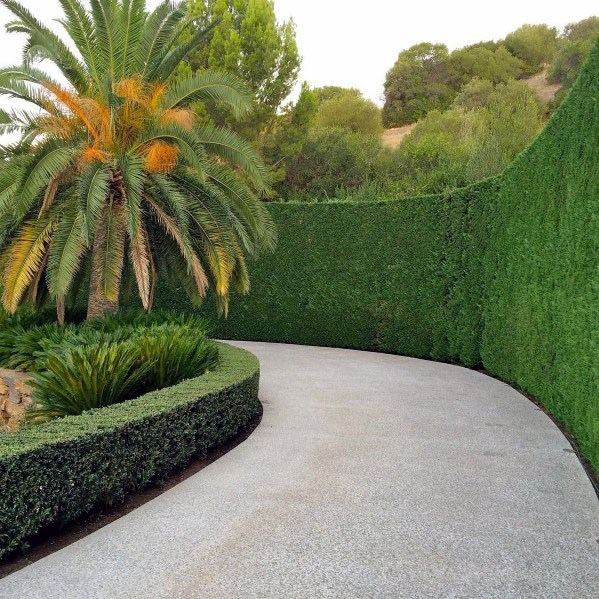 Trimmed Hedges=design Ideas Driveway Landscaping