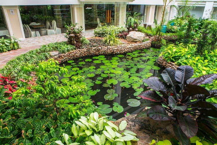 Tropical Luxury Backyard Garden Pond