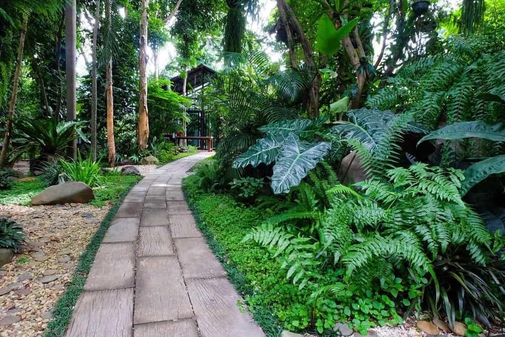tropical shade garden ideas 1