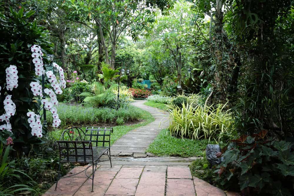 tropical shade garden ideas 2