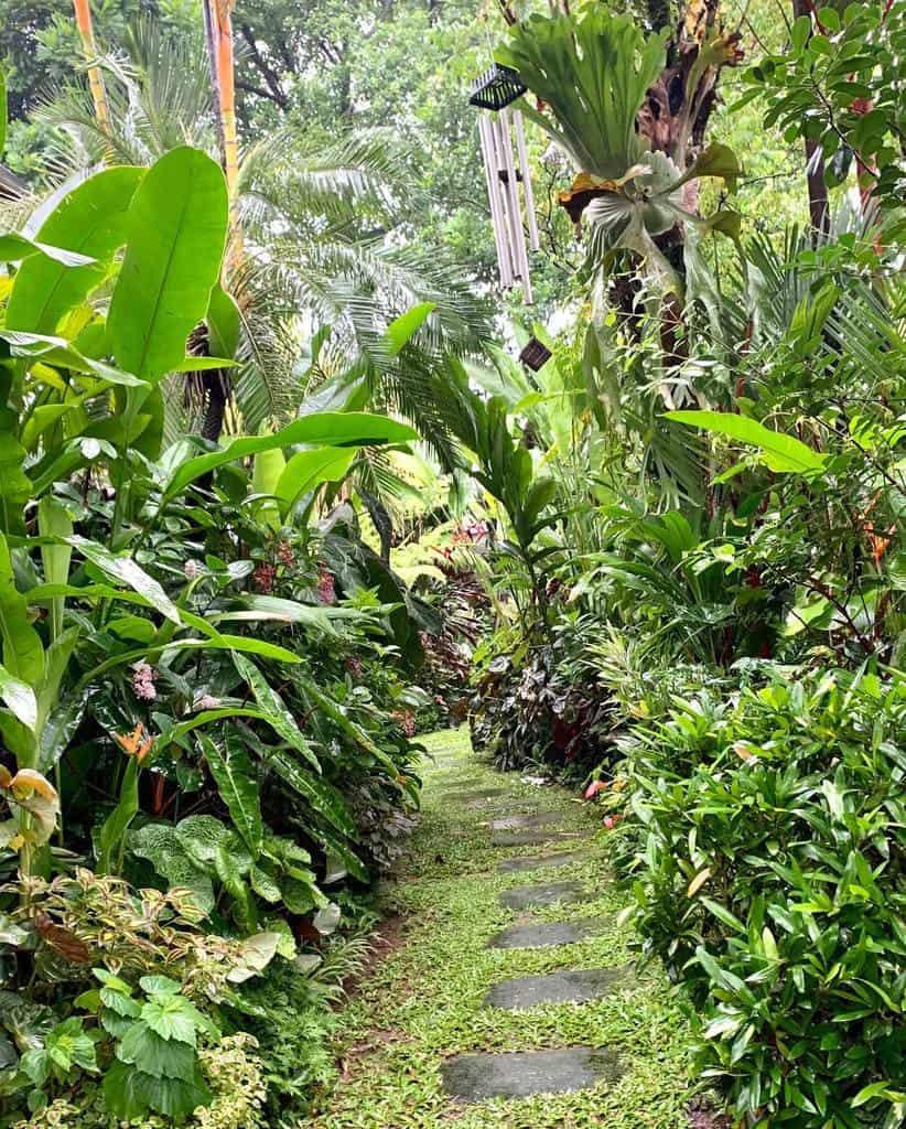tropical shade garden ideas minsgarden