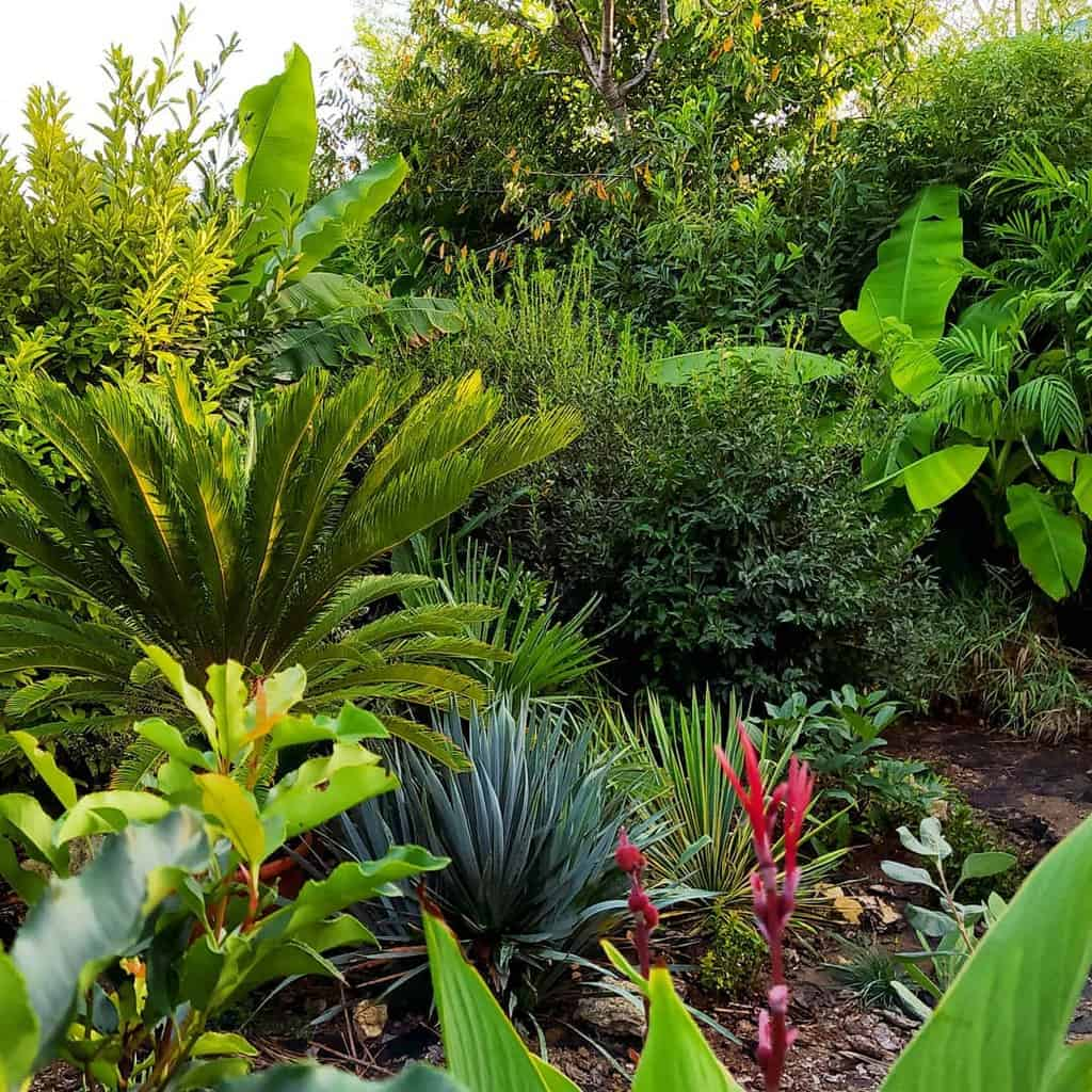tropical shade garden ideas sastrtropical62