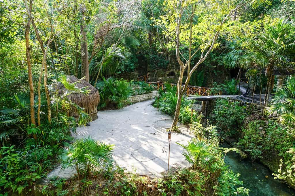 tropical shade garden ideas