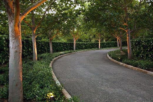 Unique Gravel Driveway Landscaping Hedges And Tree Ideas