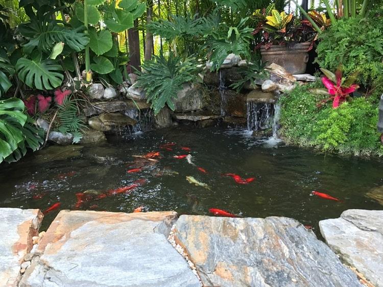 Unique Small Backyard Koi Pond Ornamental Plants