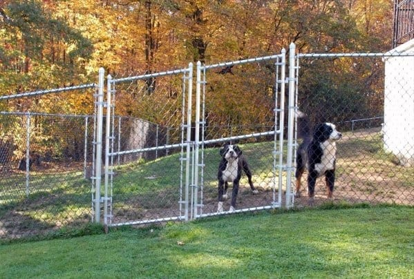 Unpainted Steel Chain Link Fence Dog Fence Ideas