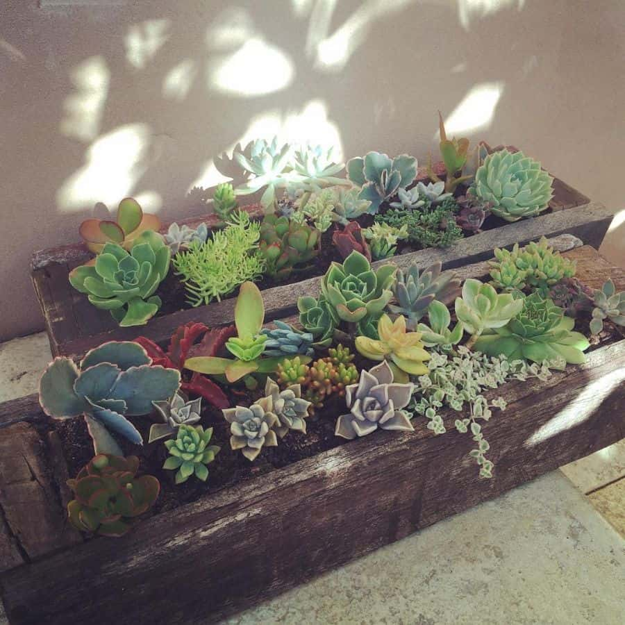 upcycled pallet garden ideas succulentsistas