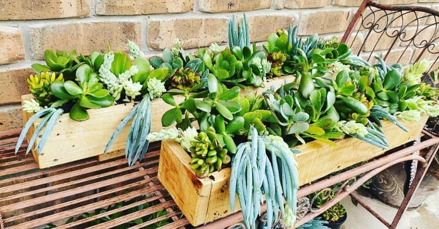 upcycled pallet garden ideas vansfoliageandflora