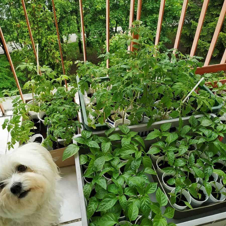 vegetable garden ideas gosia__pop