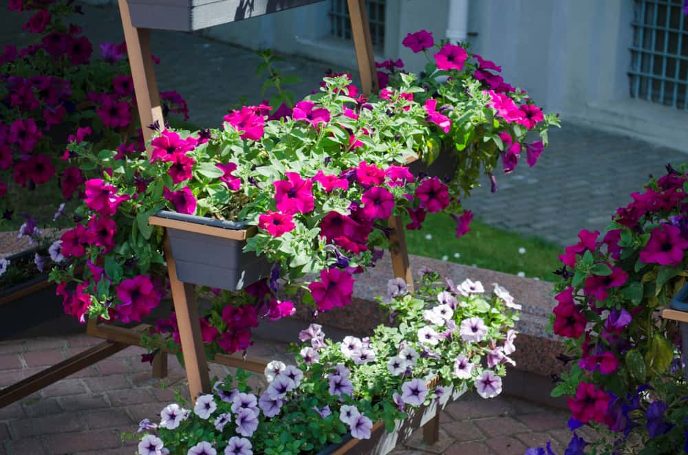 vertical flower garden ideas 2