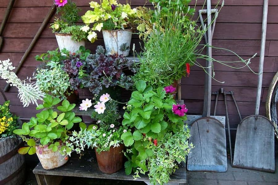 The Top 71 Container Garden Ideas – Landscaping and Design