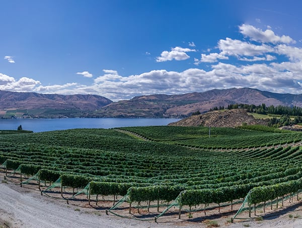 Vineyard Manager Outdoor Jobs That Pay Well