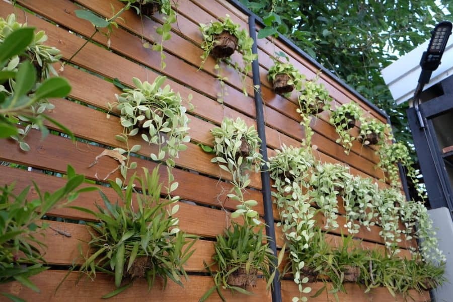 wall ideas for vertical garden 5