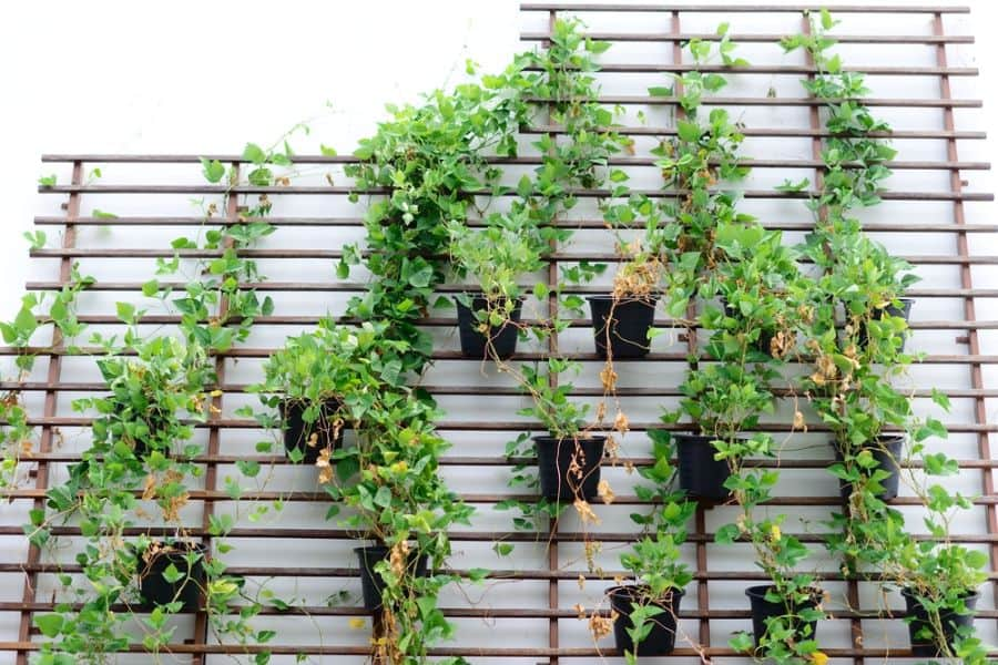 wall ideas for vertical garden 6