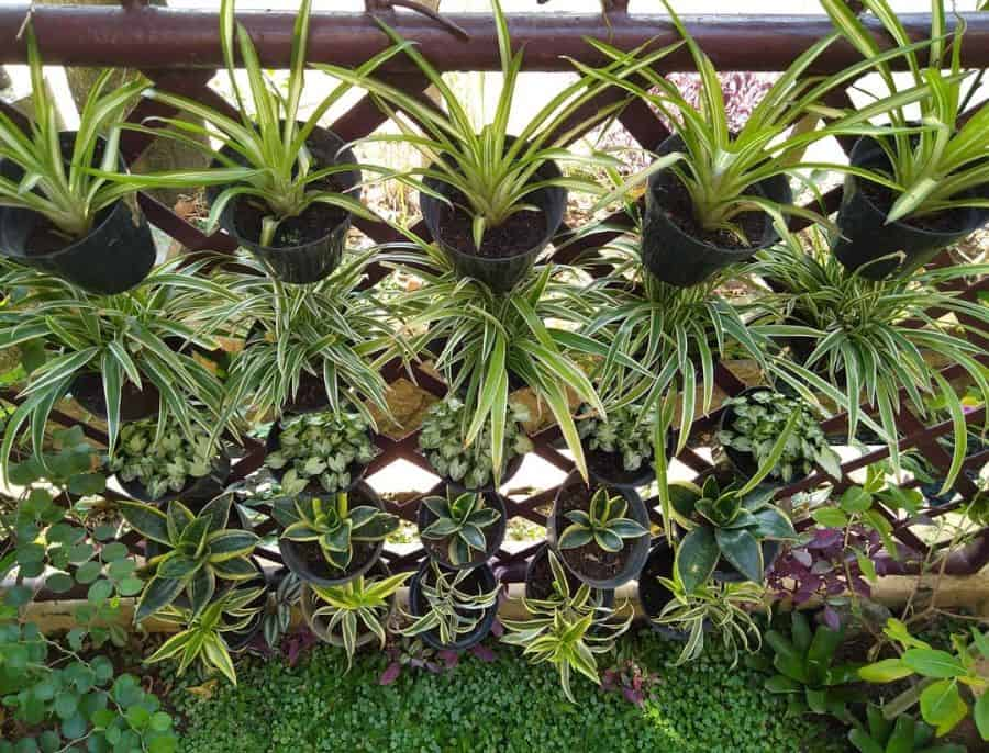 wall ideas for vertical garden lily.plantstory