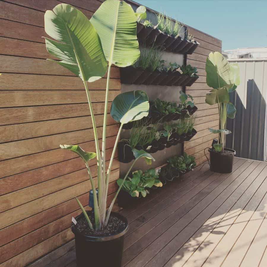 wall planter vertical garden ideas the.greens.garden