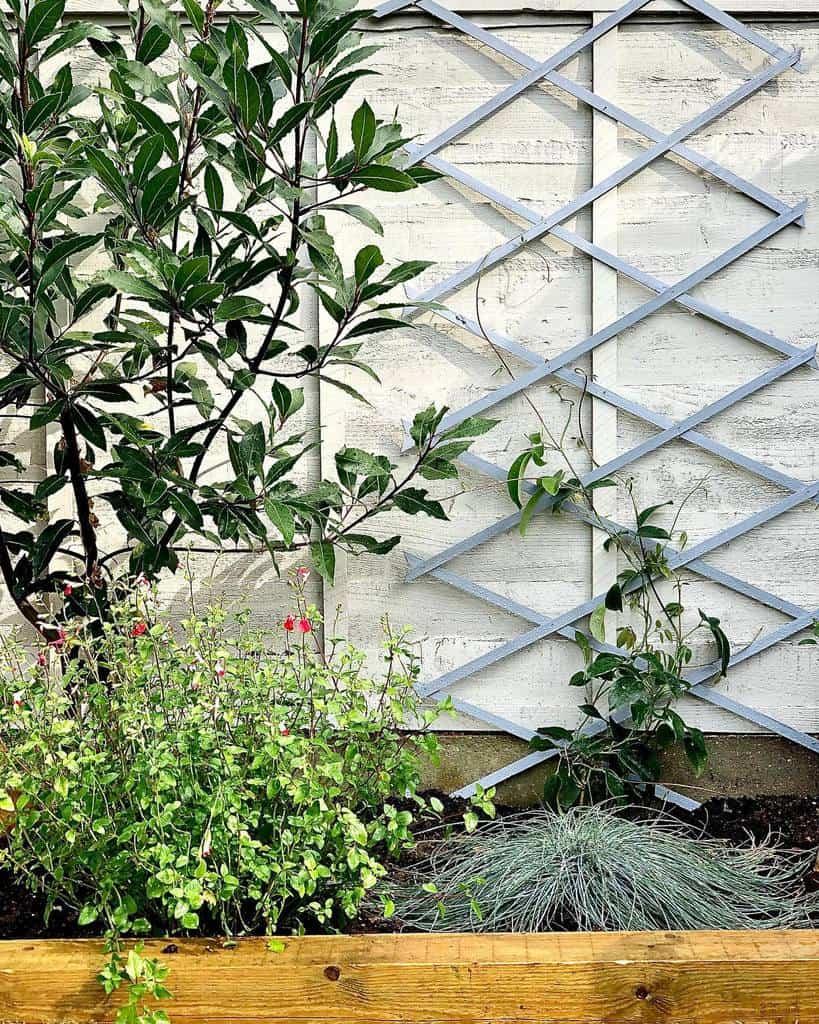 wall trellis garden trellis ideas thebluedoorsociety