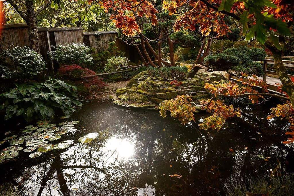water feature shade garden ideas carlym_photography