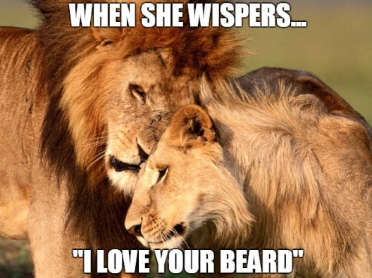 When She Wispers I Love Your Beard Memes