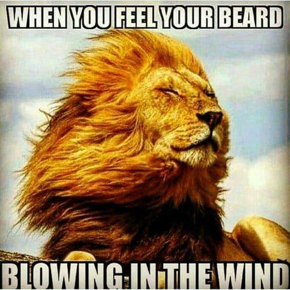 When You Feel Your Beard Blowing In The Wind Meme