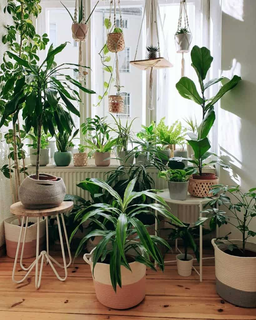 window and sunroom plants indoor garden ideas j9s_jungle