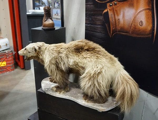 Wolverine Boots Stuffed Animal Display At Outdoor Retailer Winter Market