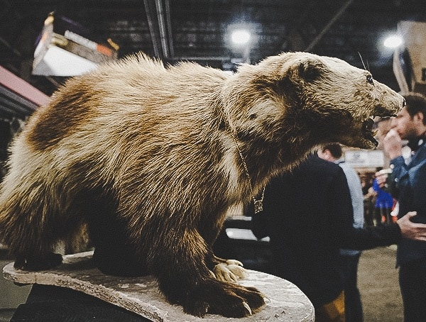 Wolverine Taxidermy Shot Show 2019 Display